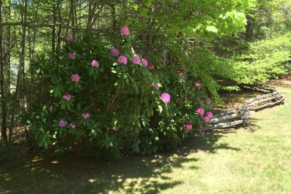 Blue Ridge property (41)